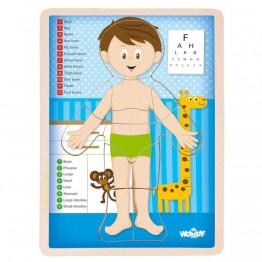 Woodyland, Човешкото тяло, момче - дървен пъзел