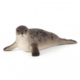 Сив дългомоцунест тюлен