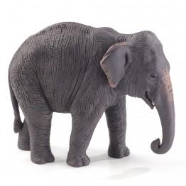 Азиатски слон